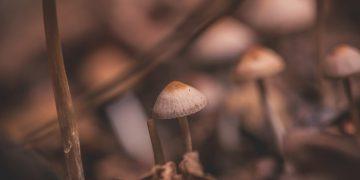 פטריות, צילום: Jez Timms